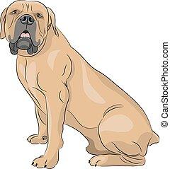 Vector. Boerboel. - South African Boerboel Dog in the rack.