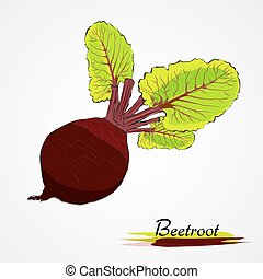 beetroot - Hand drawn vector ripe black beetroot vegetable...
