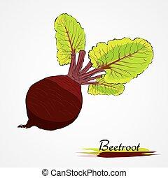 beetroot - Hand drawn vector ripe black beetroot vegetable...