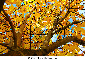 Autumn leaves - Beautiful bright yellow autumn leaves on...