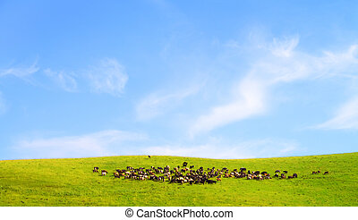 A herd of cows on the field