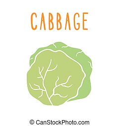 Green cabbage isolated on white.