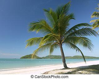 Palmtree - A Palmtree on a tropical beach at Langkawi...