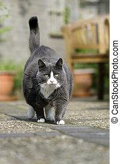 Grey chubby cat