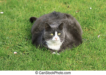 Lots of cat in the garden - Beautiful obese cat spread out...