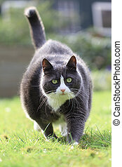 Fat cat workout - Beautiful fat obese kitty cat on a diet...