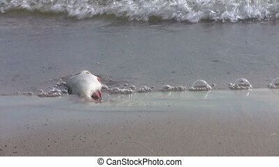Dead fish on the beach in water