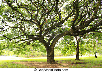 big tree with branches