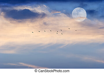 Moon Clouds Skies Birds - Moon clouds birds is a soft...