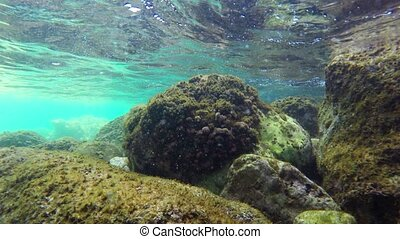 Underwater scenery - Diving Underwater footage Shot in...