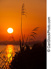 Sunset with Meadow Grass, Chalkidiki - Sunset in Sithonia,...