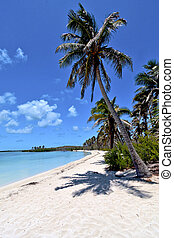 isla contoy sand in mexico froath sunny day - blue isla...