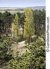 Deciduous trees and conifers - Deciduous trees surrounded by...