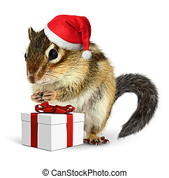 Chipmunk in red Santa Claus hat with gift box on white...