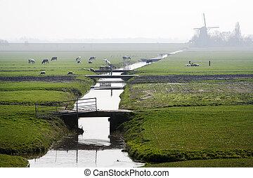 typowy,  Polder, krajobraz, Holenderski