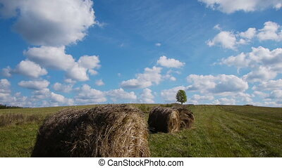 Hay bales field against lone tree
