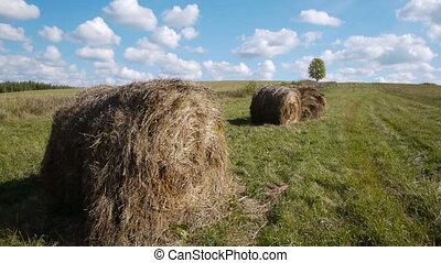 Hay bales field against lone tree - Slider shot of hay bales...