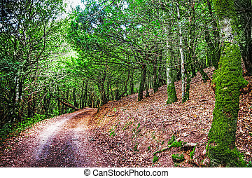 dirt road in the wood
