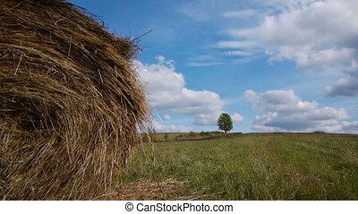 Hay bales field against lone tree