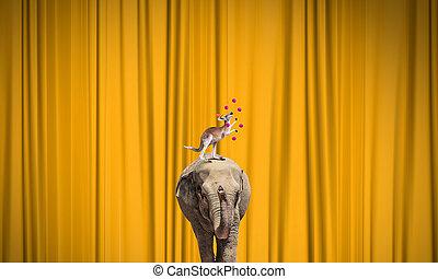 cirkusz, állatok