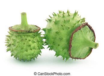 Medicinal Datura fruits