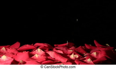 Drops of water falling on background of petals Slow motion -...