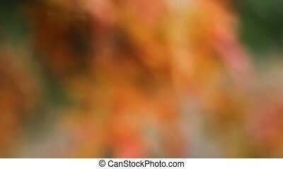 Autumn Oak leaves Bokeh 1080p - Colorful Autumn Oak leaves...