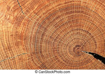 Oak split with crack and growth rings closeup macro