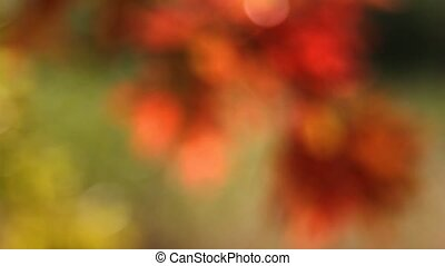 Autumn Oak leaves Bokeh - Colorful Autumn Oak leaves out of...
