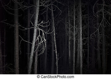 Spooky dark forest with dead trees at night