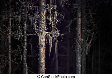 Spooky tree with beard lichen in dark forest at night
