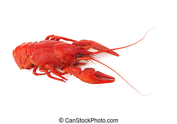 crayfish - Boiled crayfish isolated on a white background