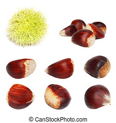 Set chestnut isolated on white background, sweet edible...