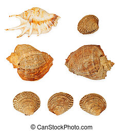 ocean seashells collection isolated on white background