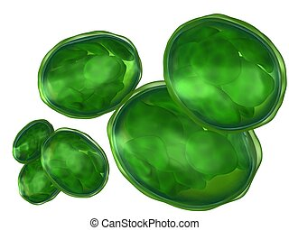 Chloroplasts isolated on white - 3d rendered set of plant...