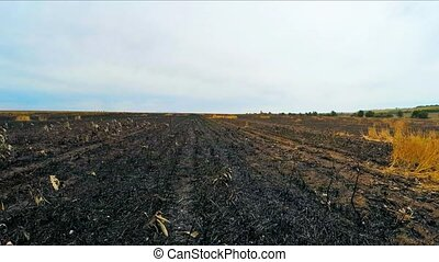 Flying Over Burnt Field In Ukraine - Flying shot over burnt...