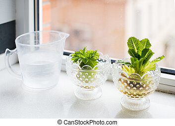 Growing celery and lettuce - Regrowing vegetables and...