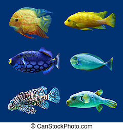 Set of tropical fish Isolated on blue Hight res