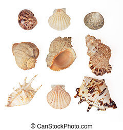 Set of sea shells Isolated on white, with clipping path
