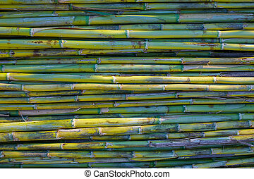 River green cane harvest texture pattern background