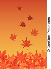Autumn maple leaves - Japanese style autumn maple leaves in...