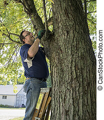 Pruning A Low Hanging Tree Branch - Pruning a low hanging...