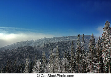 snow mountains landscape with firtree and nice foggy sky