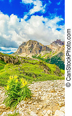 Dolomites mountains with blooming flowers, Italy - Beautiful...