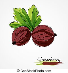red gooseberry - Hand drawn vector ripe red gooseberry...