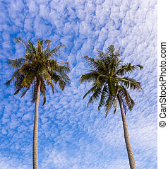 Coconut palm tree and sky blue sky