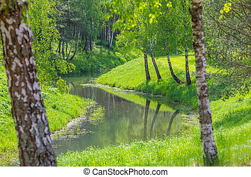 Forest river with birches green trees summer