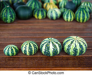 Cucurbita pepo still life green pumkins in a row - Still...