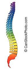 脊椎, 彩虹, 脊骨, 上色