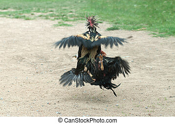 Cockfight in Thailand. - Fighting cocks in a vicious attack...